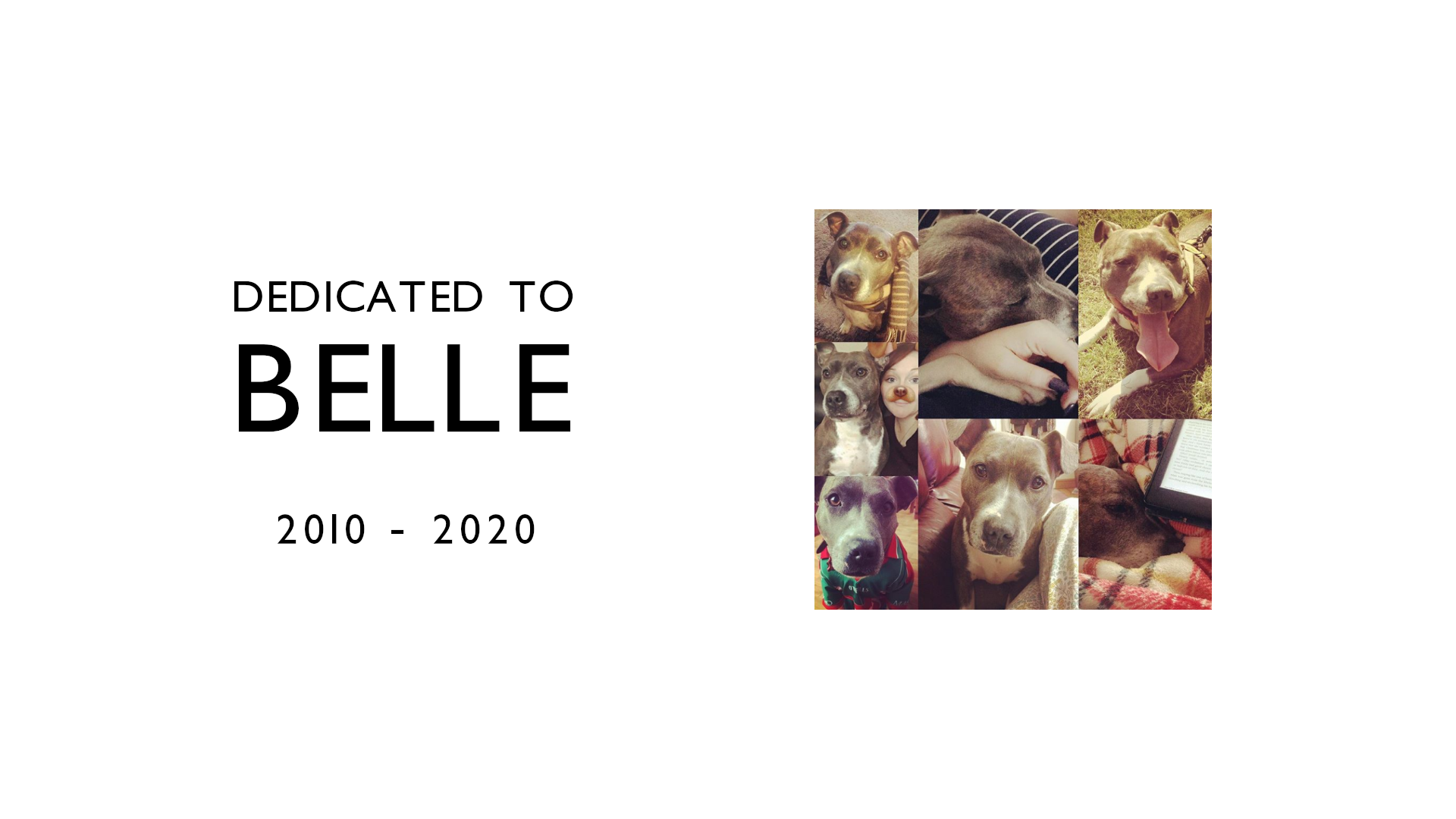 Belle was a Staffordshire Bull Terrier who we rescued 8 years ago. She was the perfect dog, and she'll be missed.